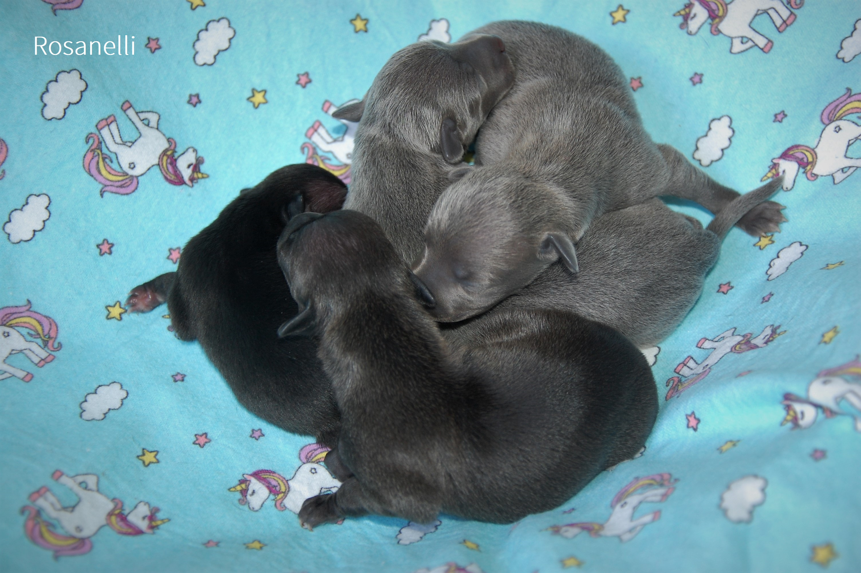New litter born in our kennel