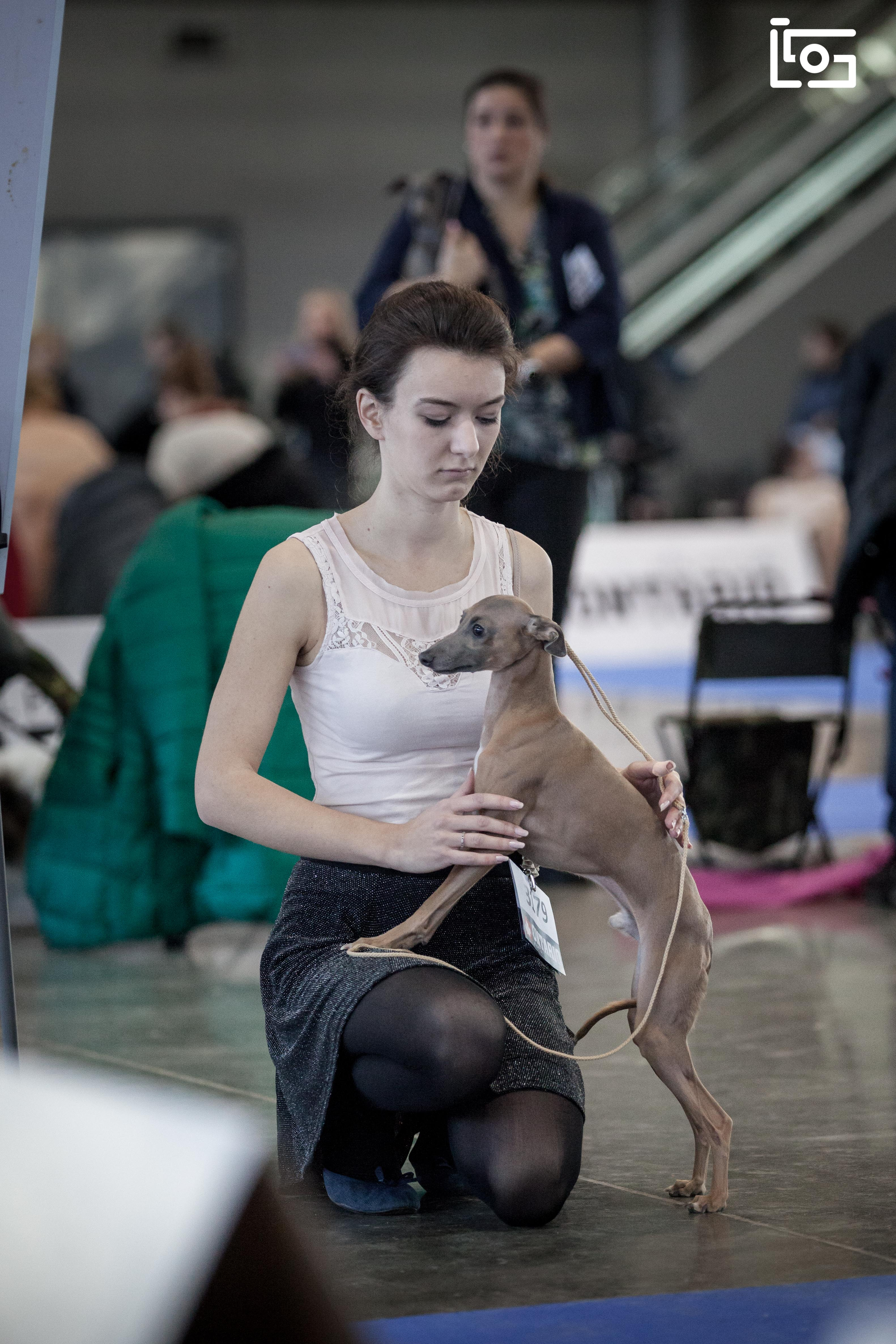 National dog show Brno